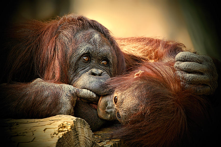 Tender Moment by Donna Proctor