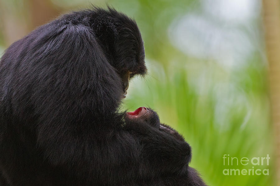Gibbons Photograph - Tender Moments by Ashley Vincent