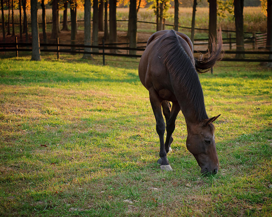 Equine Photograph - Tender Spring Grass by Kristi Swift