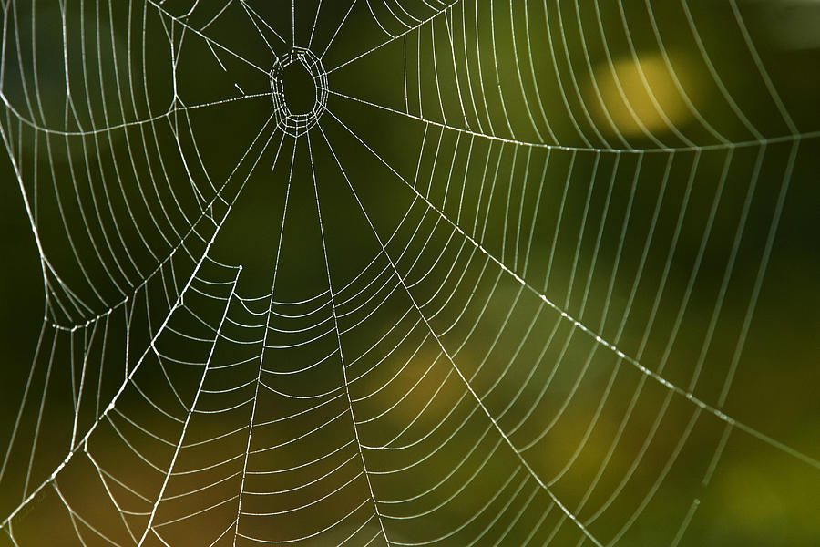 Tender Photograph - Tender Web by Christina Rollo