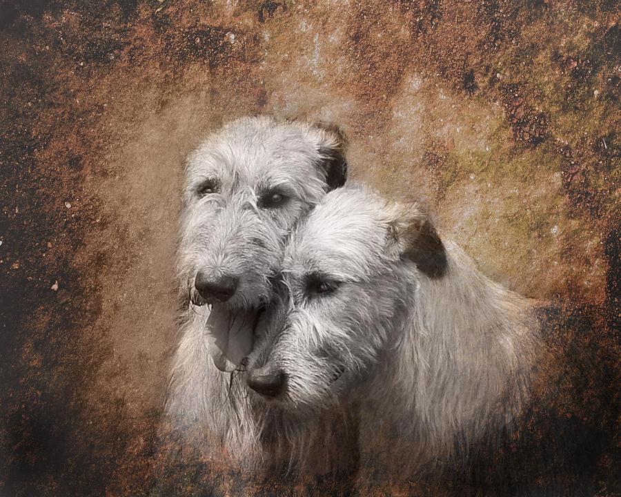 Irish Wolfhound Digital Art - Tenderness by Mary OMalley