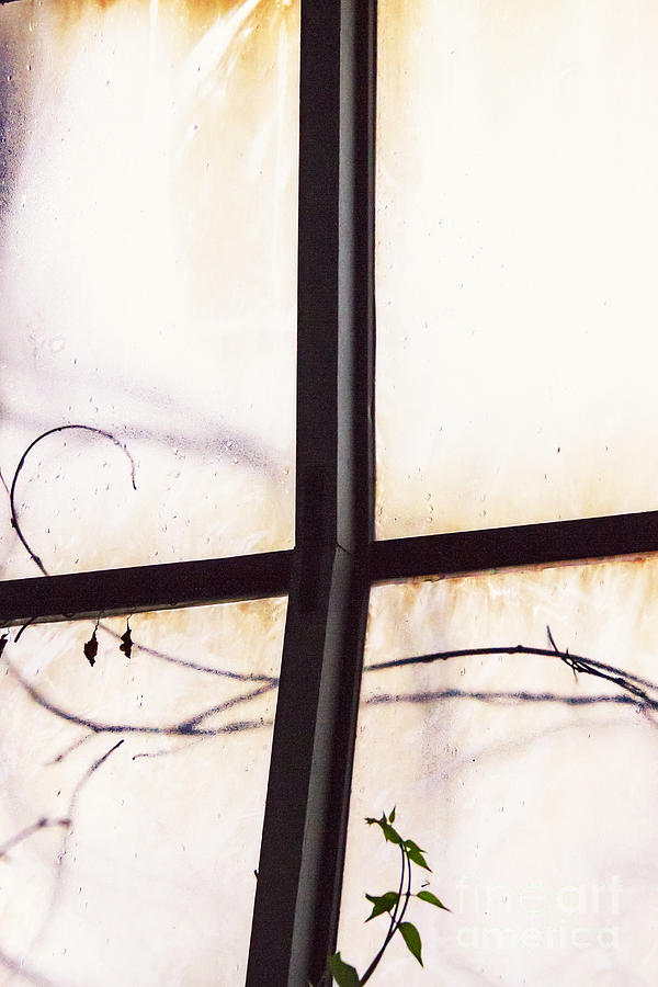 Glass Photograph - Tendrils by Margie Hurwich