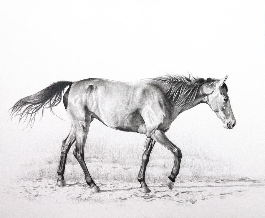 Horse Drawing - Tennessee Walking Horse by Karen Broemmelsick