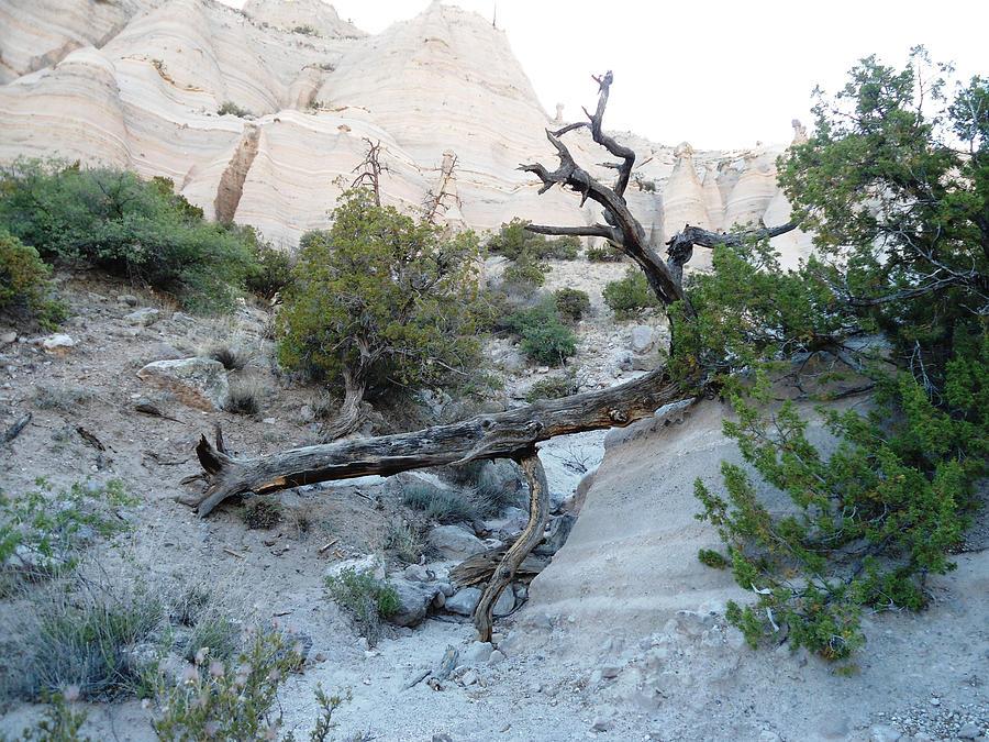 Tent Rocks 9 Photograph