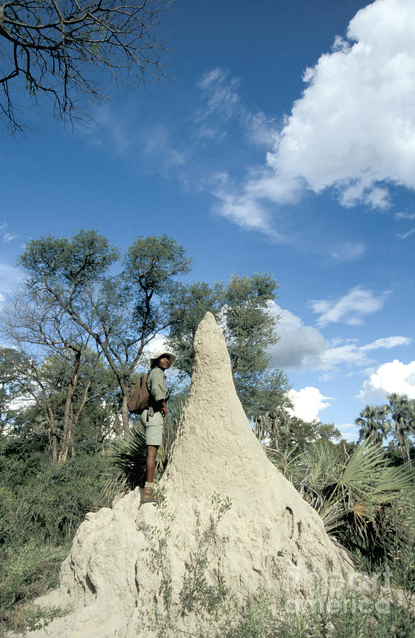 Fauna Photograph - Termite Mound by Mark Newman