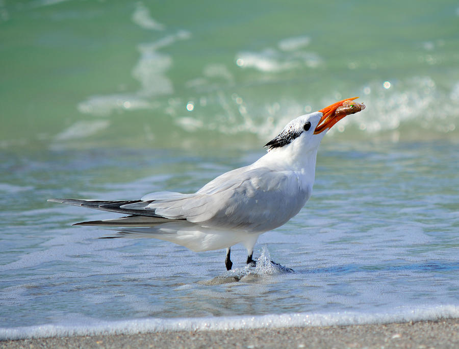 Tern Around Is Fair Play Photograph