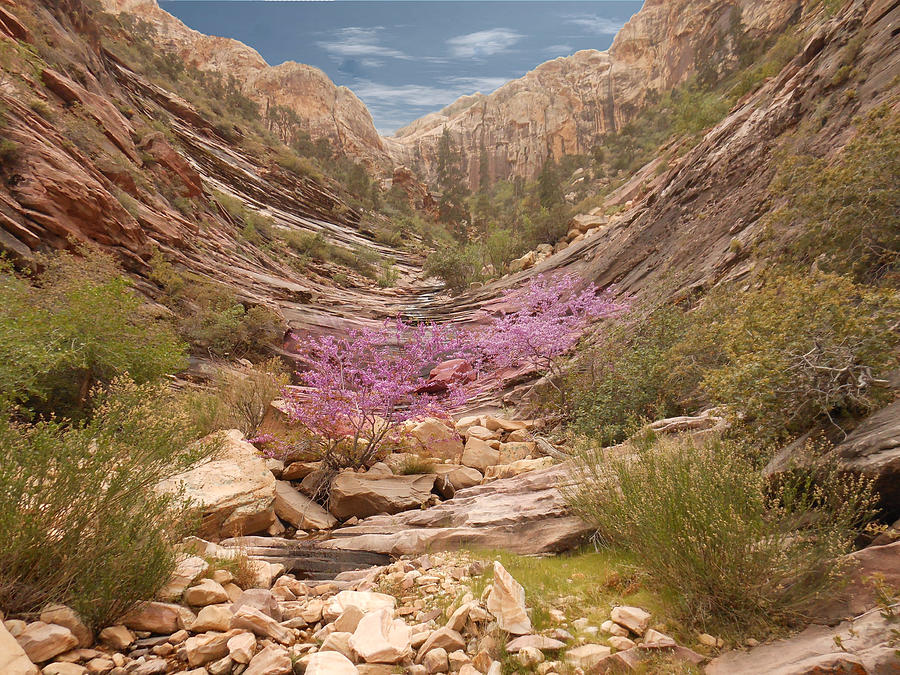 Terrace Photograph - Terrace Canyon by Alan Socolik