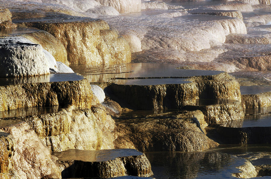 Bacterial Photograph - Terraces, Mammoth Hot Springs by Michel Hersen