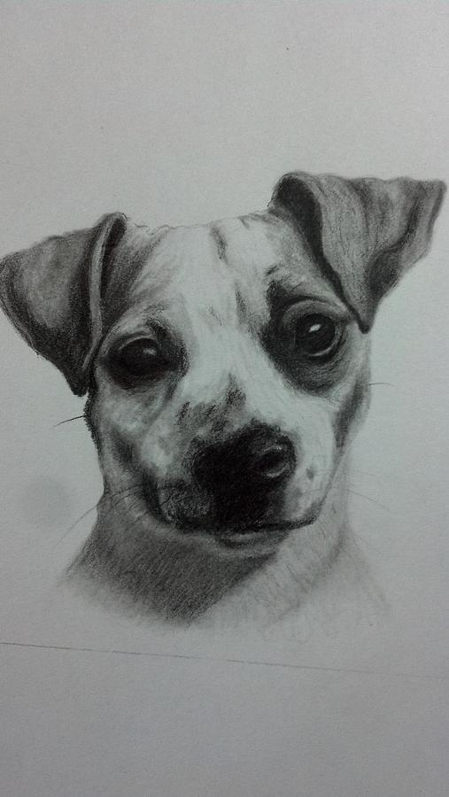 Dog Drawing - Terrier Mix by Michelle Harrington