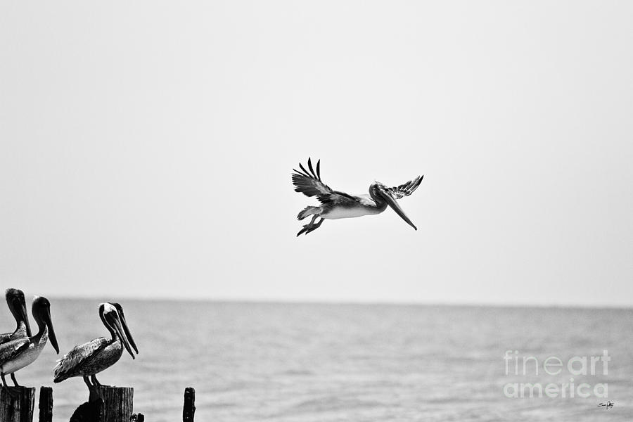 Pelican Photograph - Testing The Wind by Scott Pellegrin