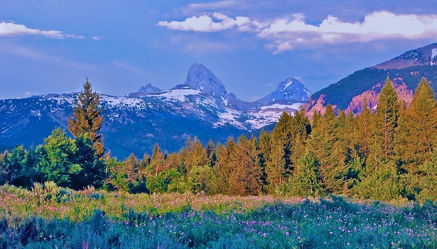 Grand Tetons Photograph - Teton Backside Wildflowers by Larry Bodinson