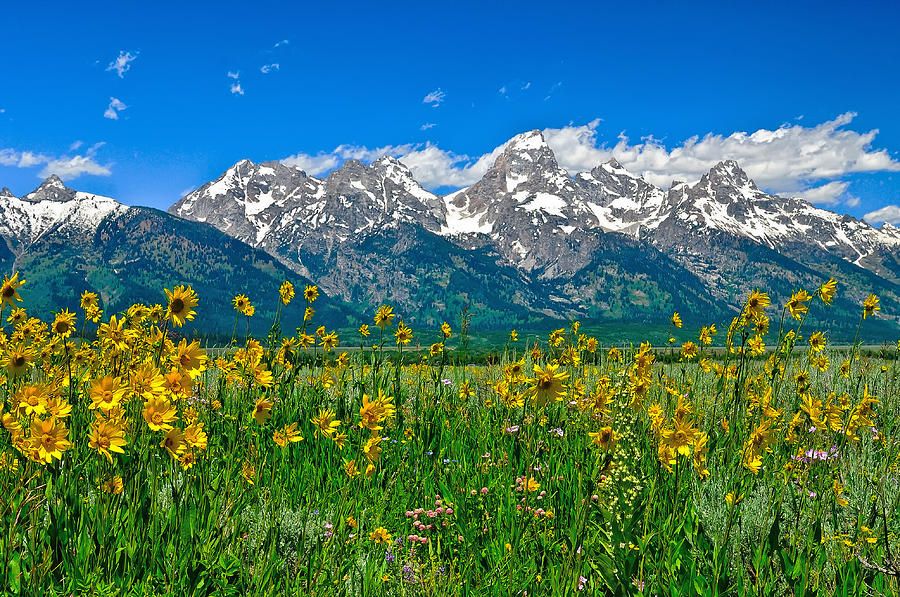 Grand Teton National Park Photograph - Teton Peaks And Flowers by Greg Norrell