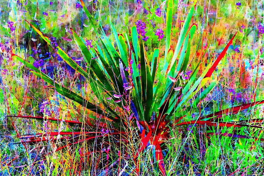 Texas Digital Art - Texas Agave Pee Wee Plant by Bonnie Chapa