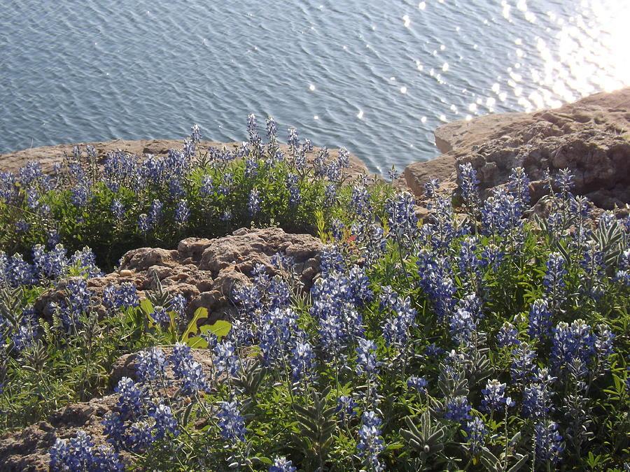 Texas Bluebonnets At Lake Travis Photograph - Texas Bluebonnets At Lake Travis by Rebecca Cearley