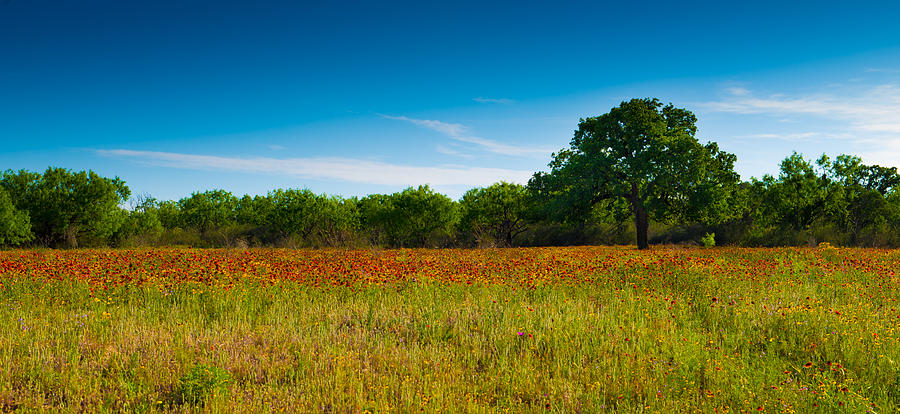 Texas Hill Country Meadow by Darryl Dalton