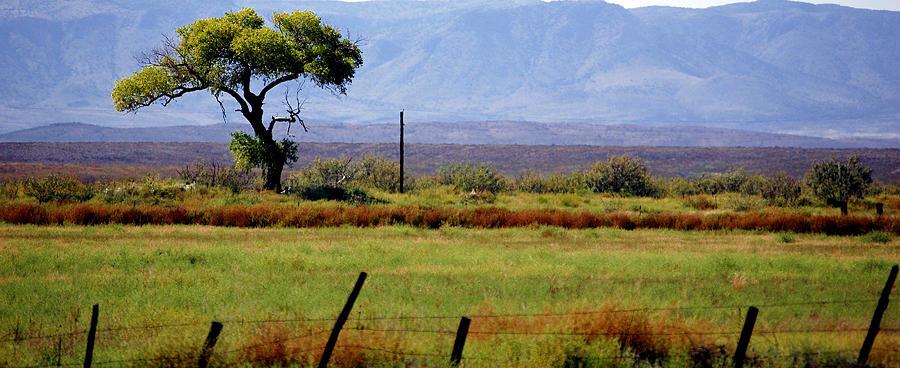 Texas Landscape 16095 Photograph