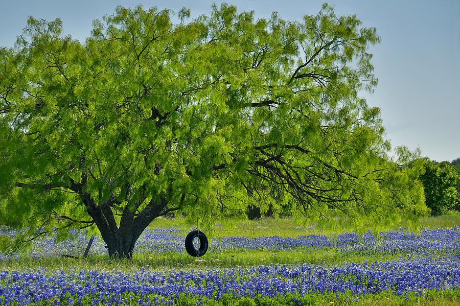 Texas Bluebonnets Photograph - Texas Life - Bluebonnet Wildflowers landscape tire swing by Jon Holiday