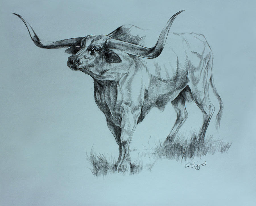 Bighorn Drawing - Texas Longhorn by Derrick Higgins