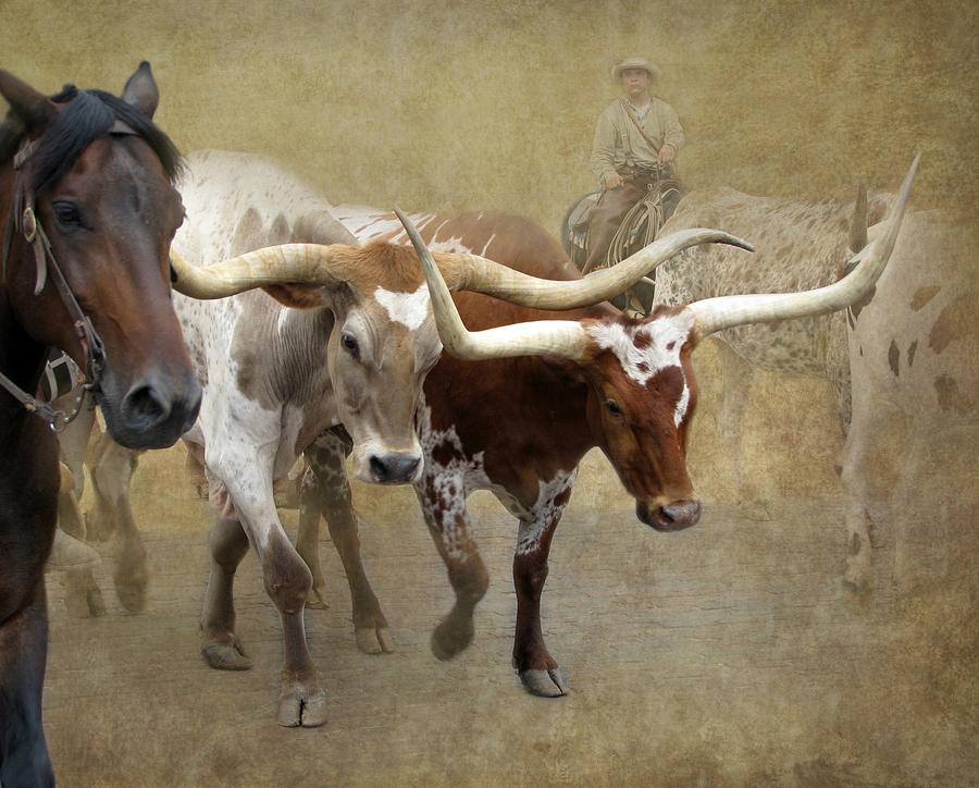 Longhorn Photograph - Texas Longhorns by Angie Vogel
