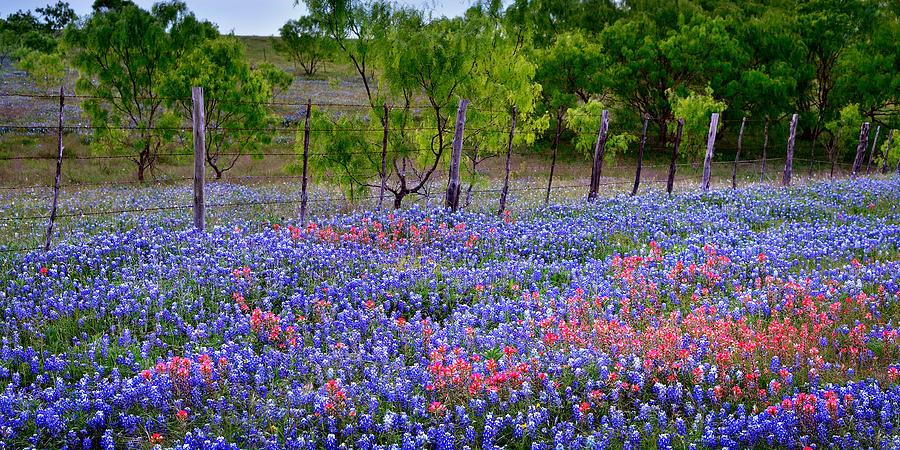 Texas Roadside Heaven -Bluebonnets paintbrush Wildflowers Landscape by Jon Holiday
