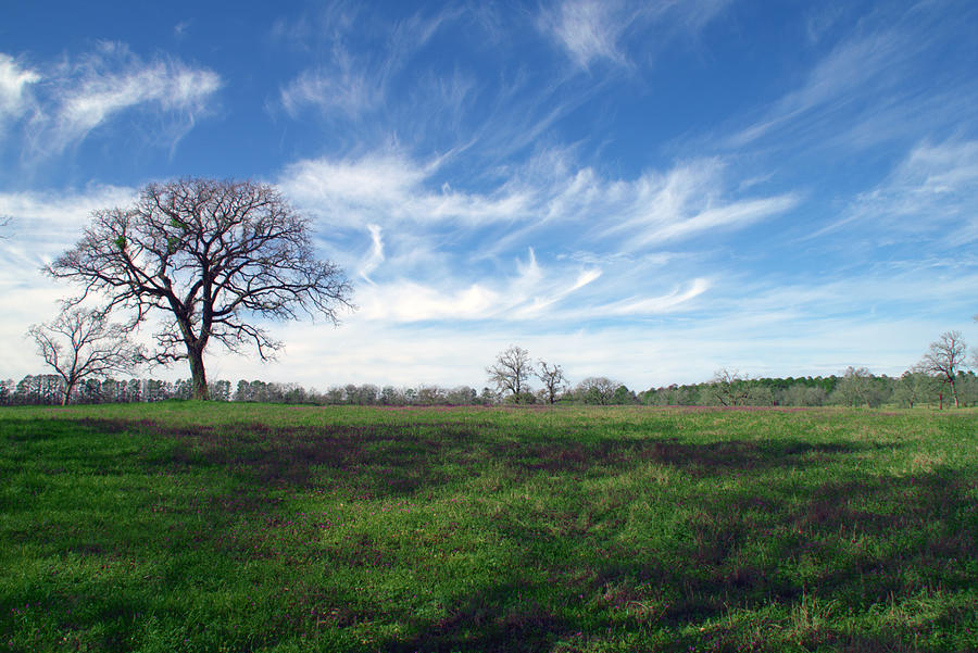 Tree Photograph - Texas Sky by Brian Harig