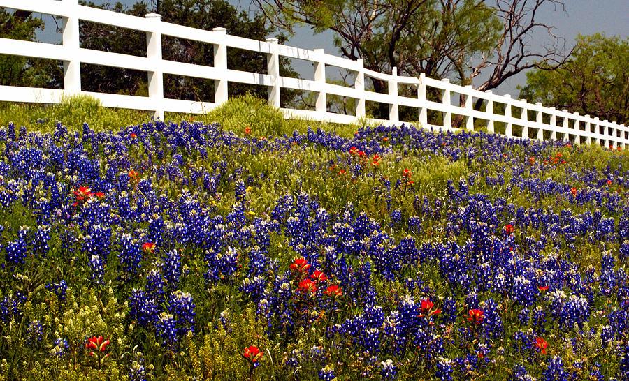 Blue Bonnets Photograph - Texas Spring by Brian Kerls