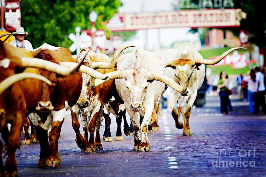 Texas Stockyards Photograph