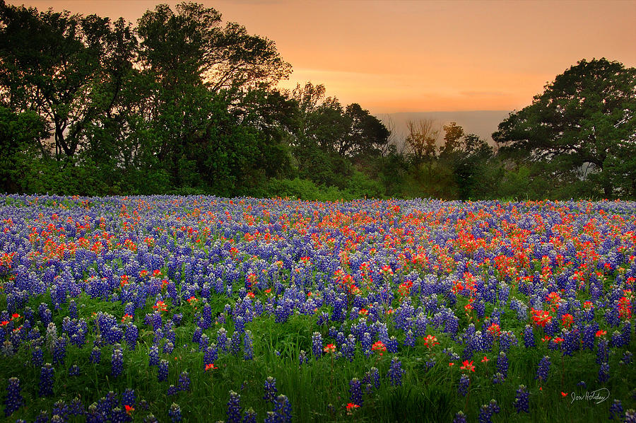 Bluebonnets Photograph - Texas Sunset - Bluebonnet Landscape Wildflowers by Jon Holiday
