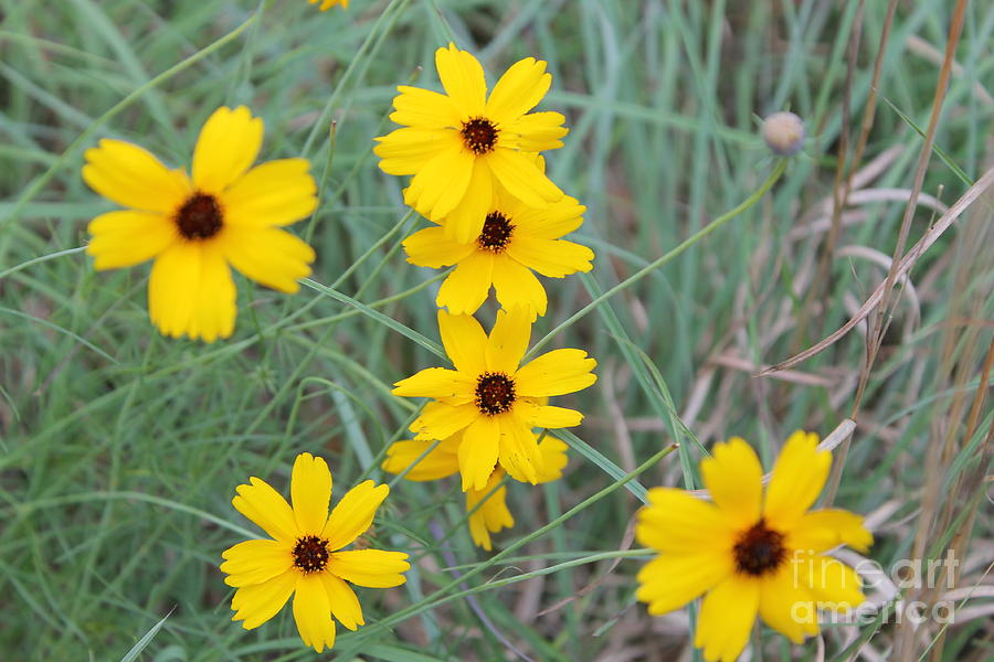 Wild Flowers Photograph - Texas Wild Flower by Angie Andress