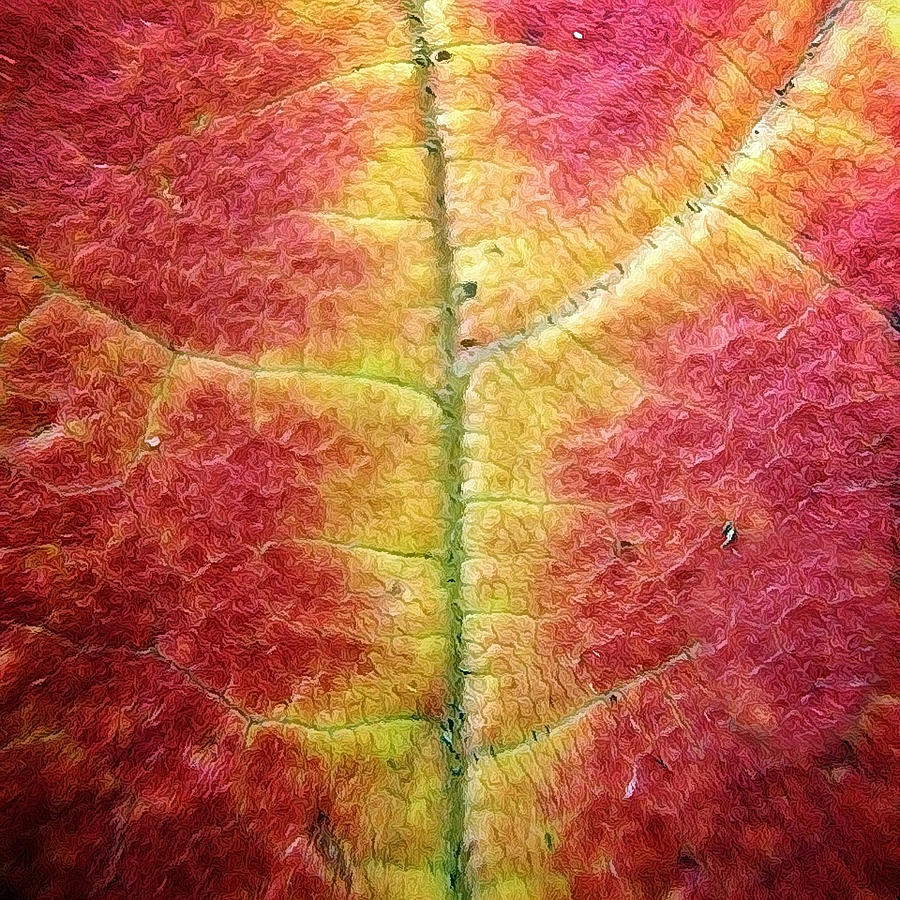 Leaf Photograph - Textural Intricacy by Natasha Marco
