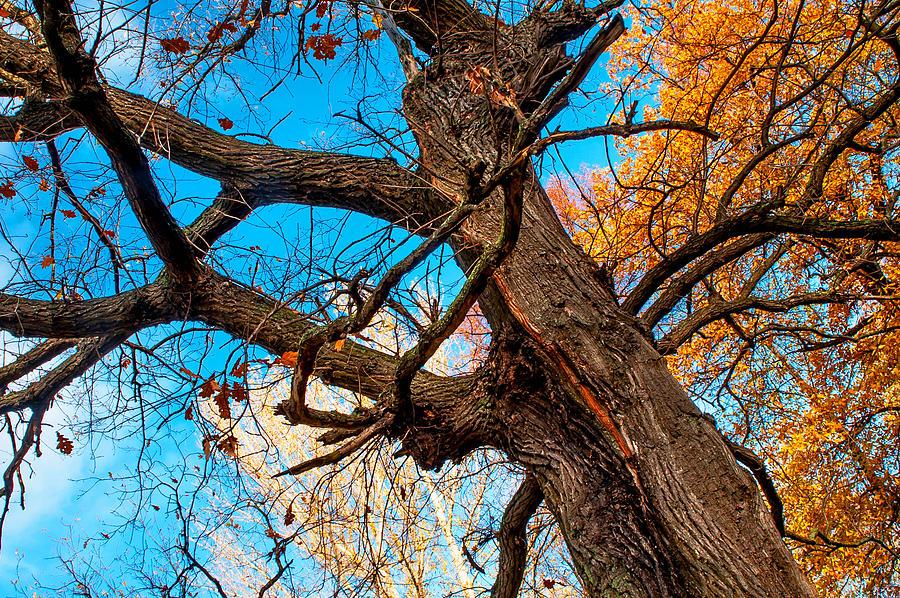 Autumn Photograph - Texture Of The Bark. Old Oak Tree by Jenny Rainbow