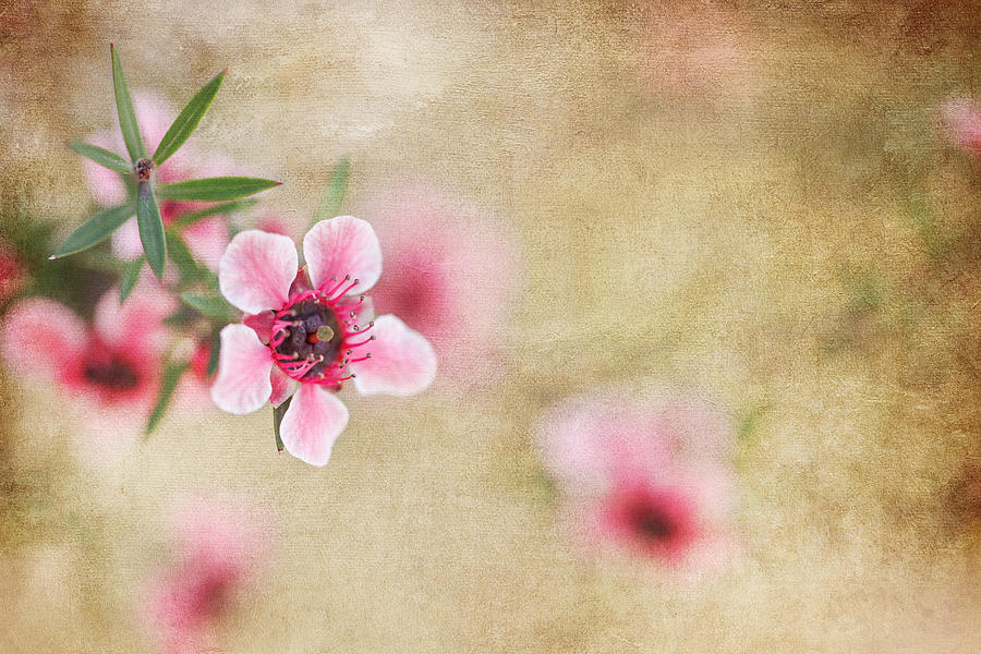 Blossom Photograph - Textured Blossoms by Terry Ellis