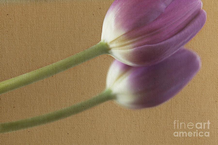 Textured PurpleTulip by Eden Baed