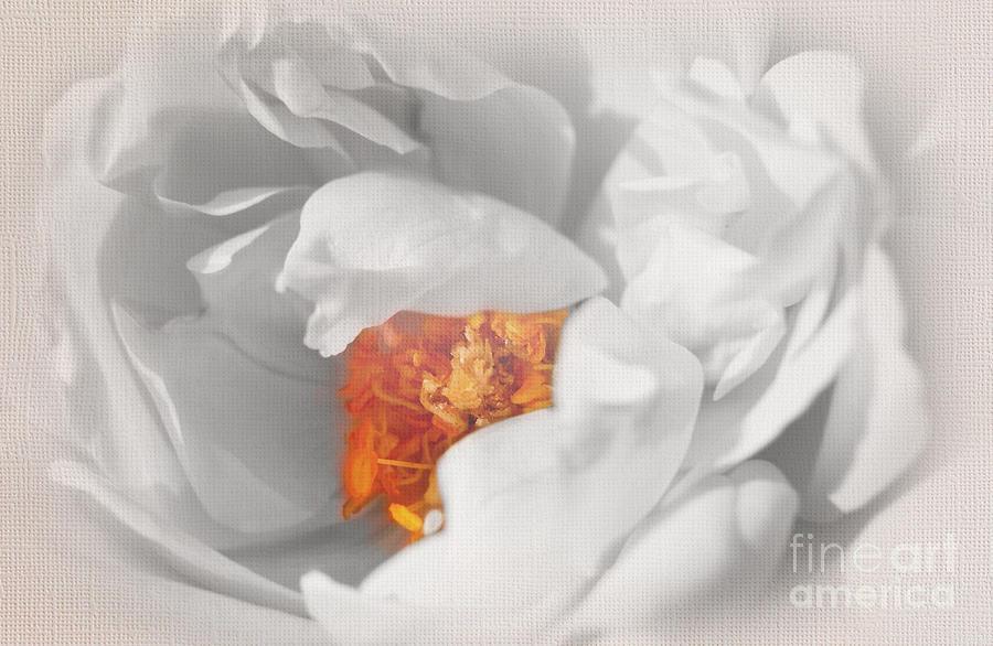 Textured Summer Rose by Eden Baed