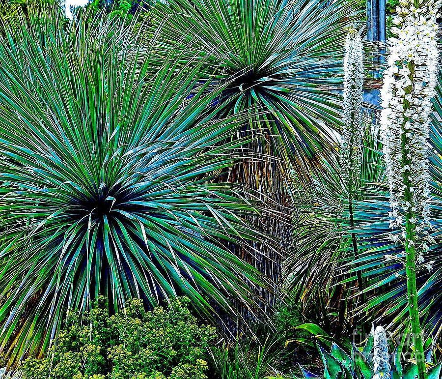 Plants Photograph - Textures by Claudette Bujold-Poirier