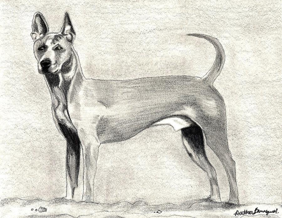 Thai Ridgeback Dog Drawing by Olde Time  Mercantile