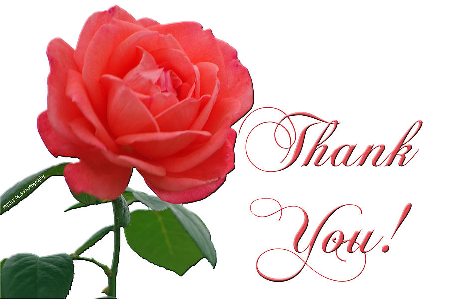 Image result for thank you rose