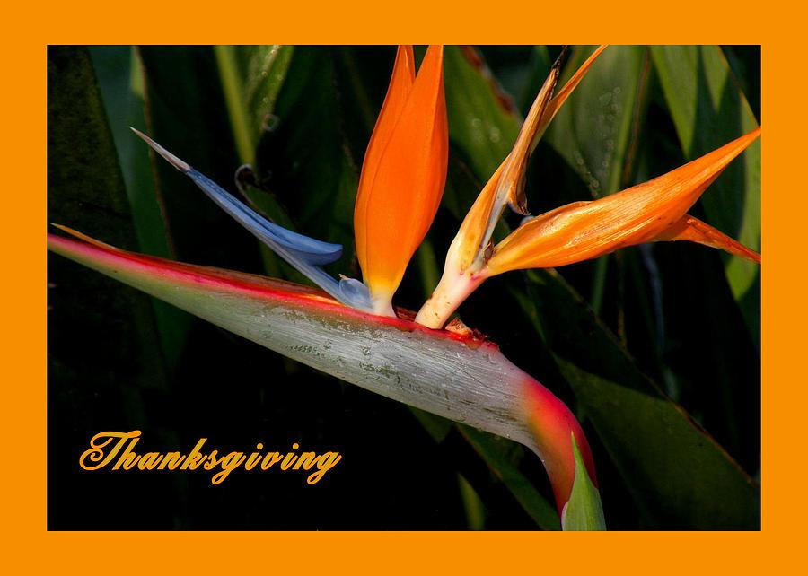 Thanksgiving Photograph - Thanksgiving Card Bird Of Paradise by Rosalie Scanlon
