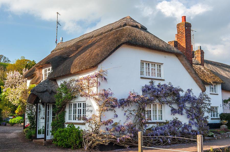 Devon Photograph - Thatched Cottage in Otterton Devon by David Ross
