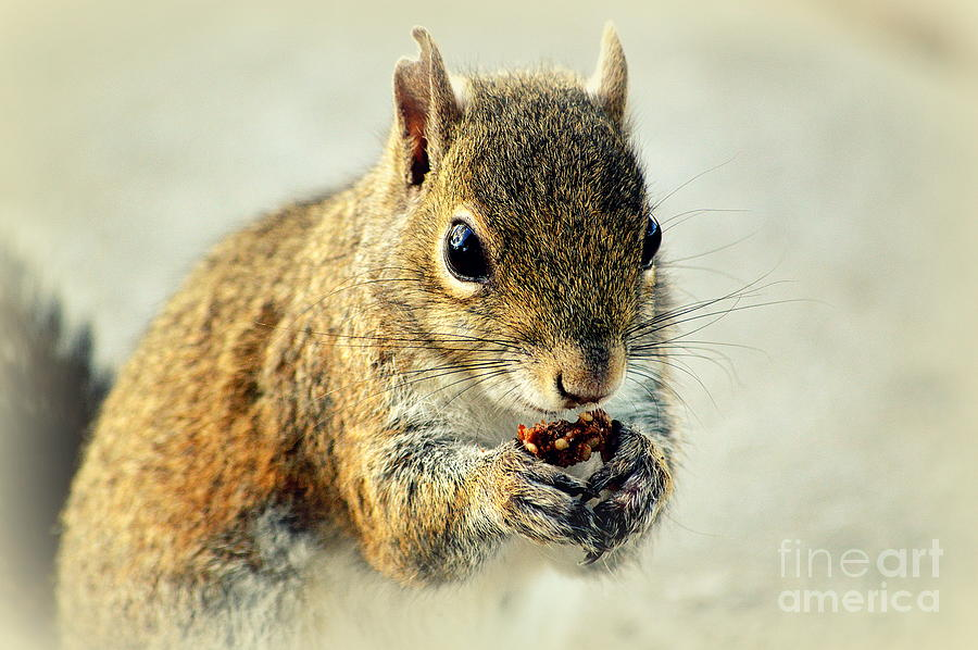 Squirrel Photograph - Thats Now Some Good Food by Susanne Van Hulst