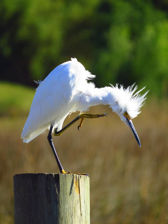 Bird Photograph - Thats The Spot by Phyllis Beiser