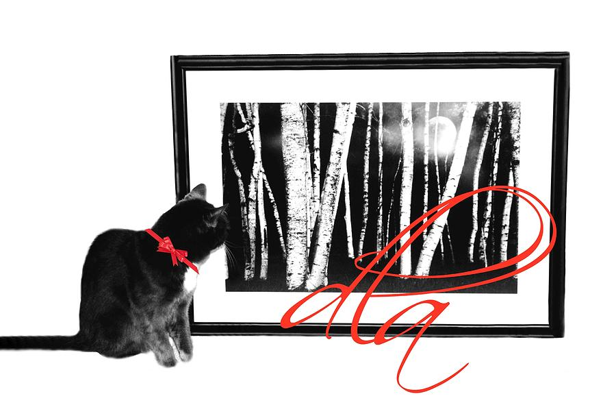 Cat Photograph - The Capture by Diana Angstadt