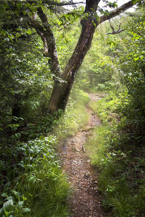 Appalachia Photograph - The Appalachian Trail by Debra and Dave Vanderlaan