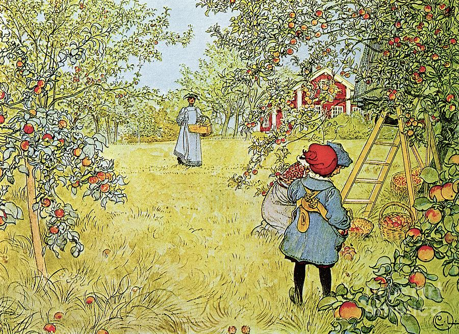 Fruit Painting - The Apple Harvest by Carl Larsson