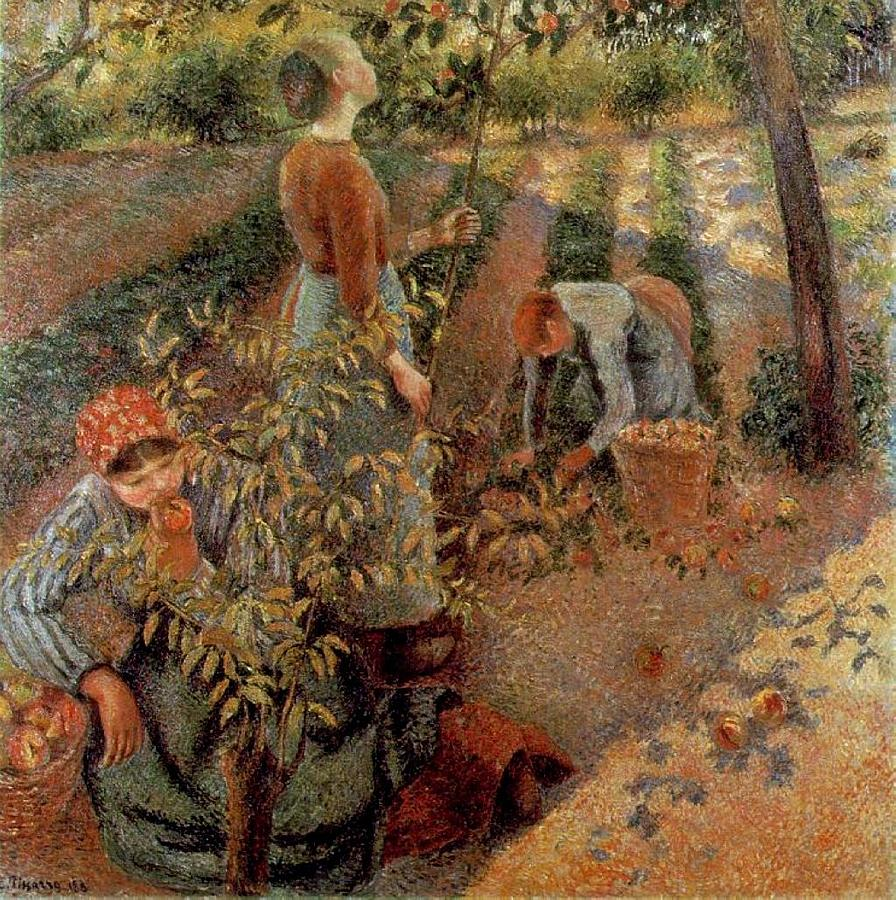 Harvest Painting - The Apple Pickers by Camille Pissarro