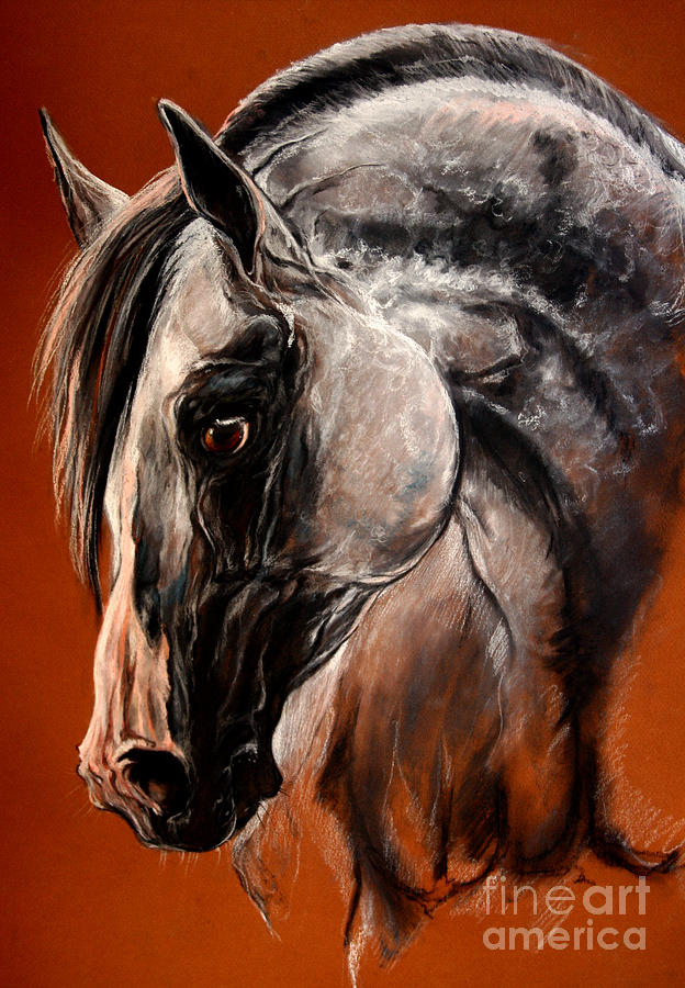 Horse Drawing - The Arabian Horse by Angel  Tarantella