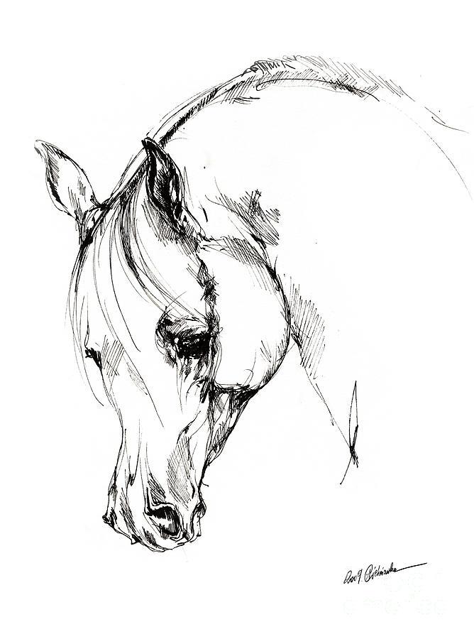 Horse Drawing - The Arabian Horse Sketch by Angel Ciesniarska