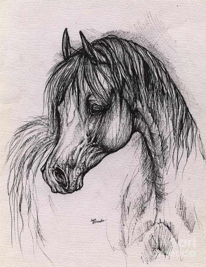 Arabian Horse Drawing - The Arabian Horse With Thick Mane by Angel  Tarantella