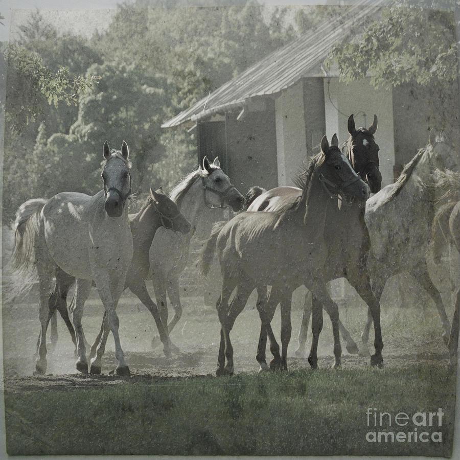 Horses Photograph - The Arabian Horses Fairytale by Angel  Tarantella