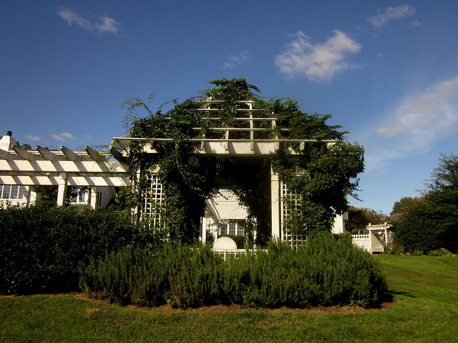 Sky Photograph - The Arbor With Rosemary by Peter LaPlaca